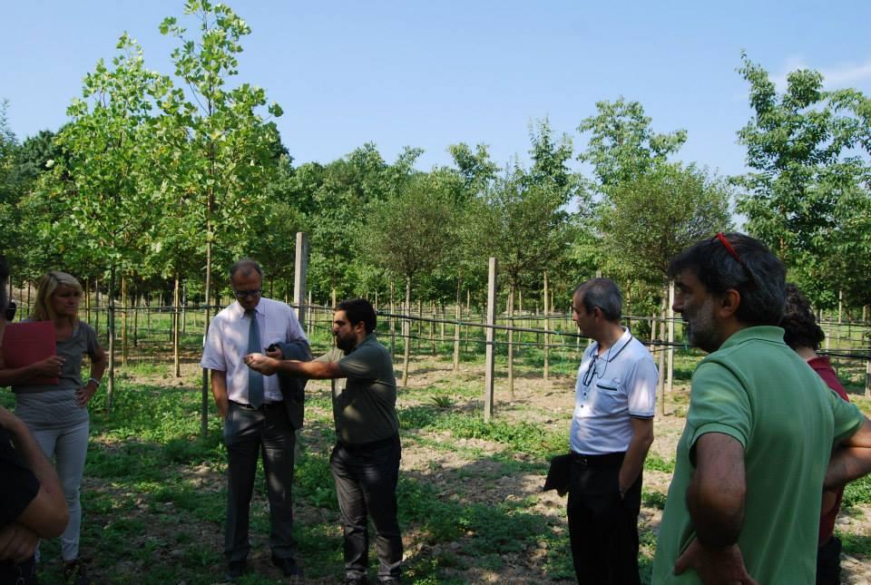 Marco grimaldi torino manifattura tabacchi dove for Vivaio alberi