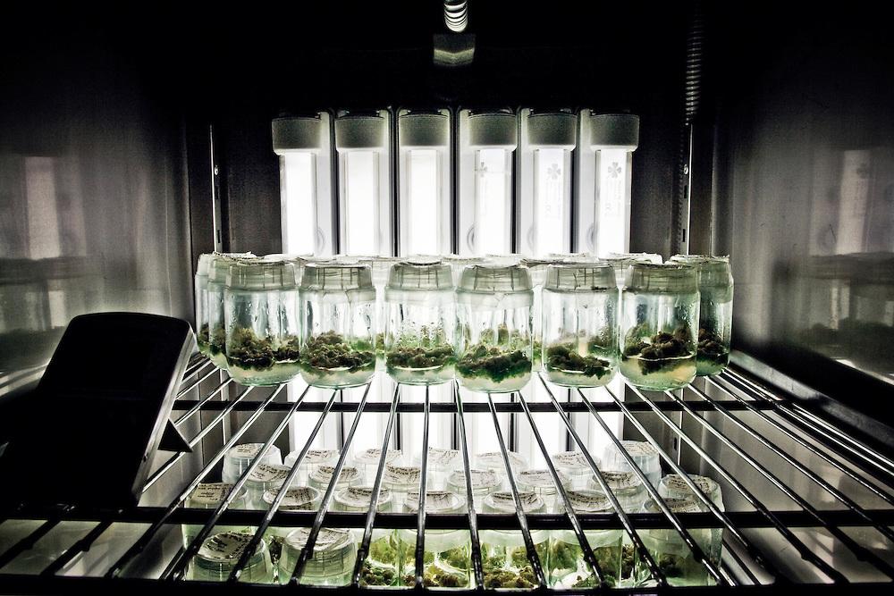 Medical Cannabis - Cannabis Terapeutica